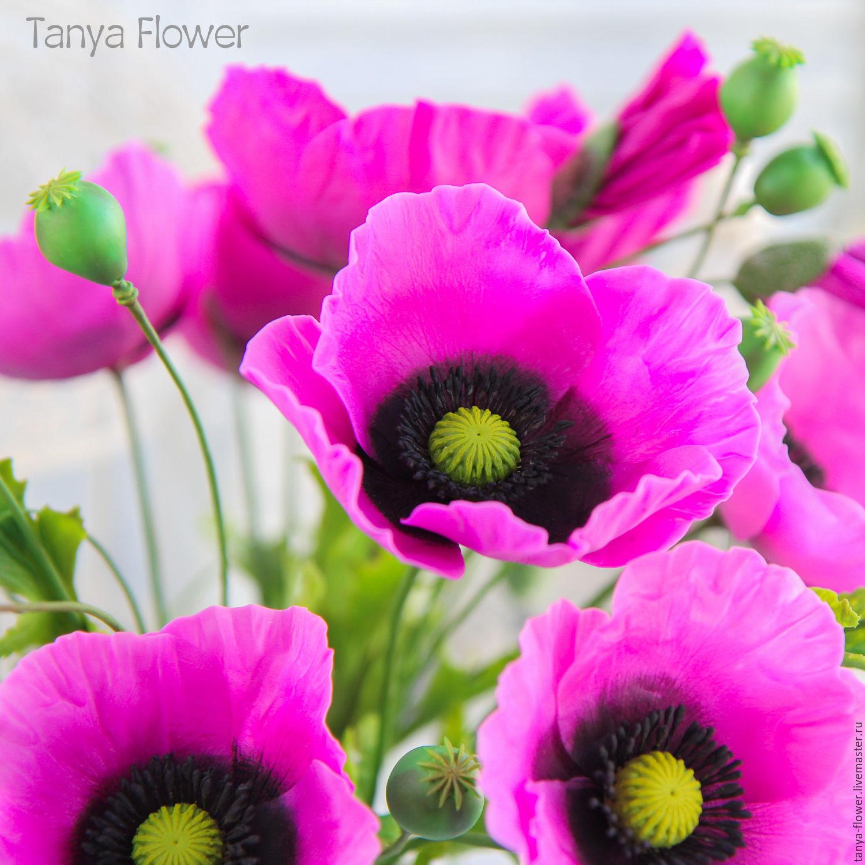 Маки купить живые цветы