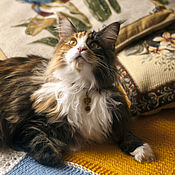 Для домашних животных, ручной работы. Ярмарка Мастеров - ручная работа украшение для домашнего питомца (luxury ошейник для кошек оранжевый). Handmade.