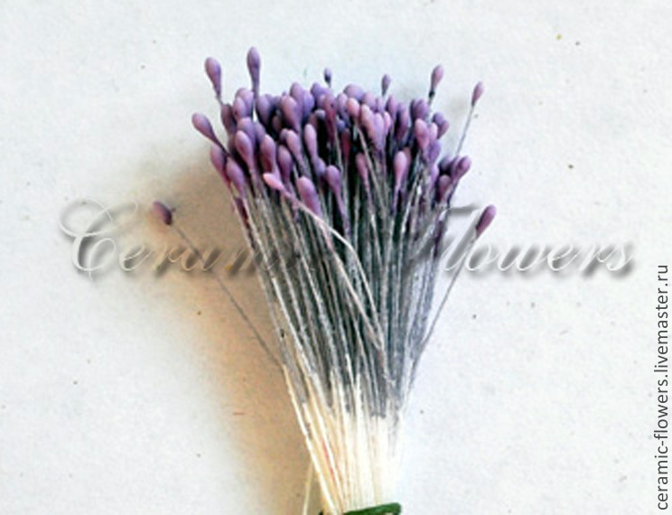 Stamens small 'Lavender', Stamens, Rostov-on-Don,  Фото №1