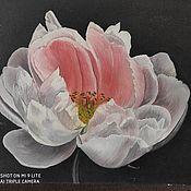 Картины ручной работы. Ярмарка Мастеров - ручная работа Картины: цветок , пион - макро.. Handmade.