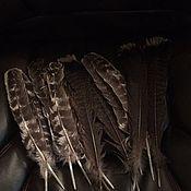 Фен-шуй и эзотерика ручной работы. Ярмарка Мастеров - ручная работа Набор перьев, индюка. Handmade.