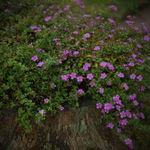 Северный цветок - Ярмарка Мастеров - ручная работа, handmade