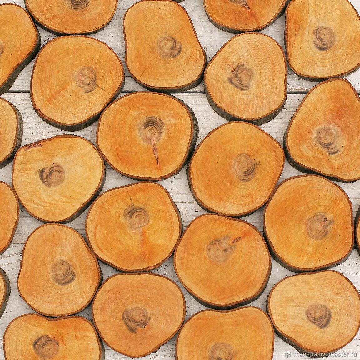 абрикос, Спилы дерева, Анапа,  Фото №1