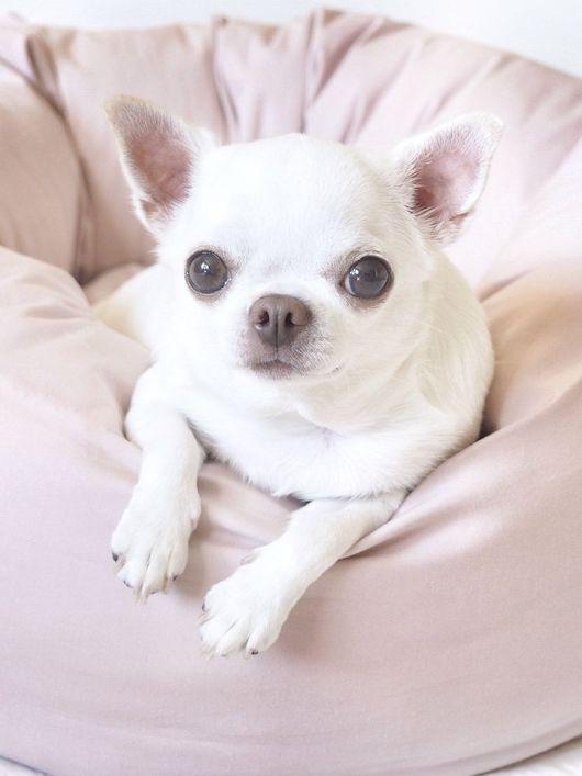 Аксессуары для собак, ручной работы. Ярмарка Мастеров - ручная работа. Купить Пуфик Розовая пудра. Handmade. Чихуахуа, розовый