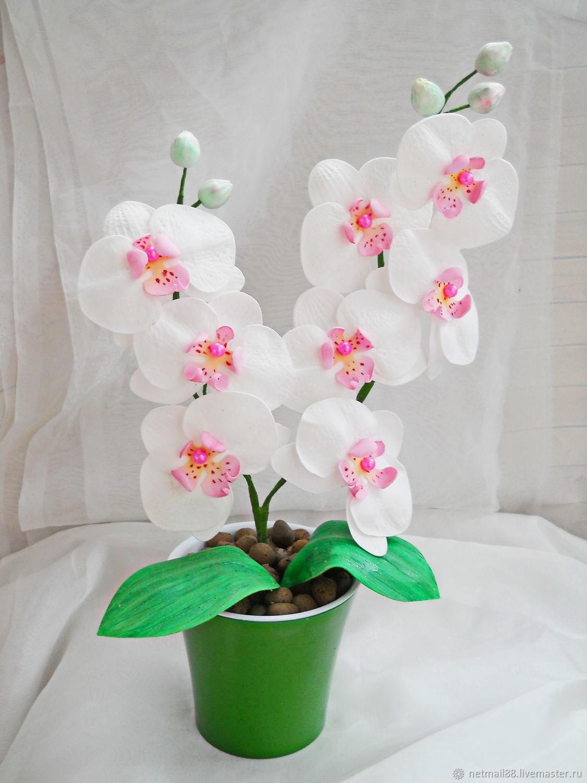 Орхидея девушке в подарок