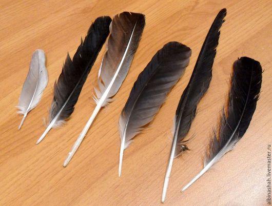 Другие виды рукоделия ручной работы. Ярмарка Мастеров - ручная работа. Купить Набор Перьев Дикого гуся. Handmade. Серый