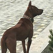 Для домашних животных, handmade. Livemaster - original item Personalized dog collar made of genuine leather, leather collar. Handmade.