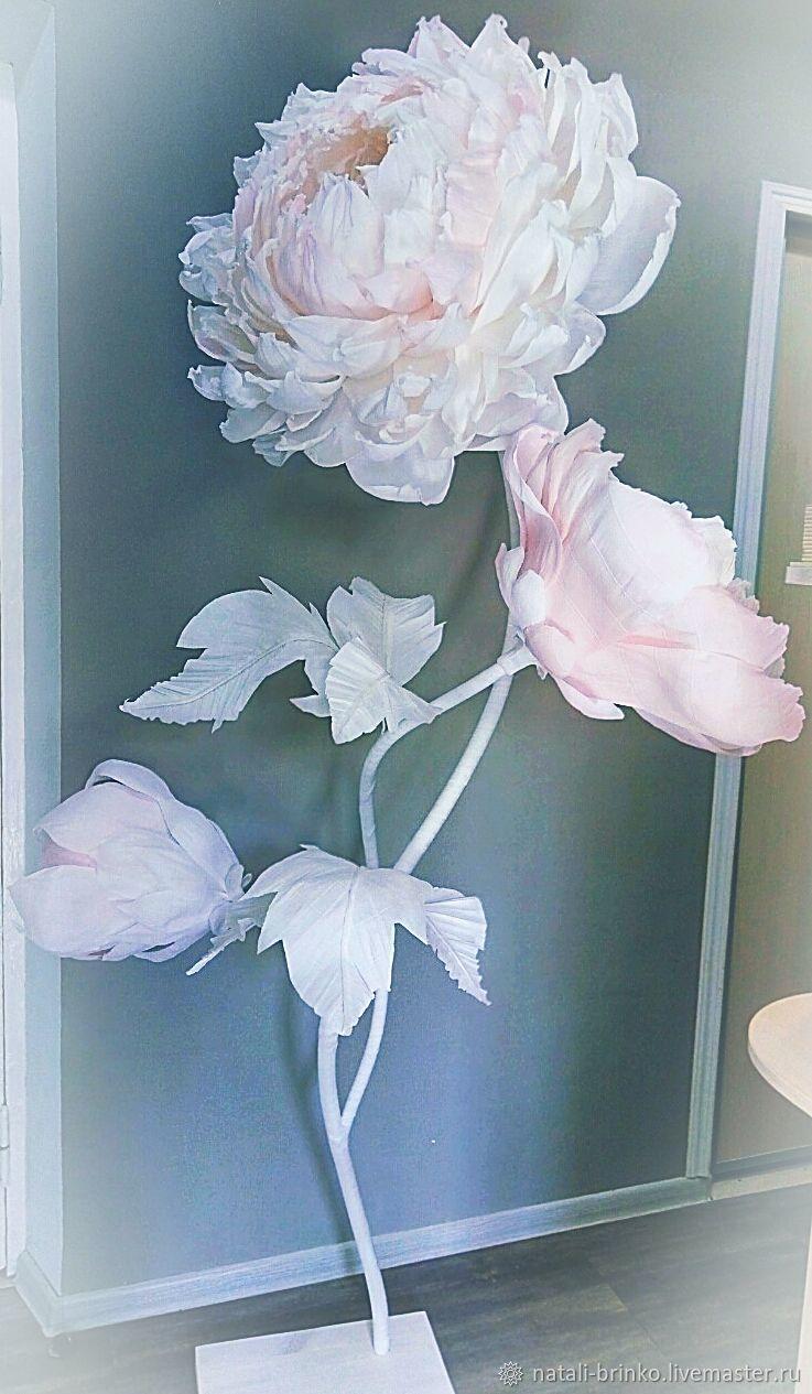 Ростовые цветы Пионы, Цветы, Иркутск, Фото №1