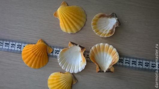 Другие виды рукоделия ручной работы. Ярмарка Мастеров - ручная работа. Купить Ракушки морские (05-098). Handmade. Оранжевый