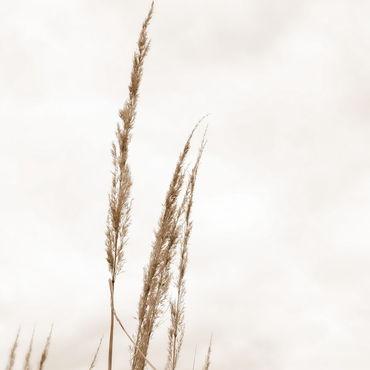 Картины и панно ручной работы. Ярмарка Мастеров - ручная работа Осень. Травы #3. Handmade.
