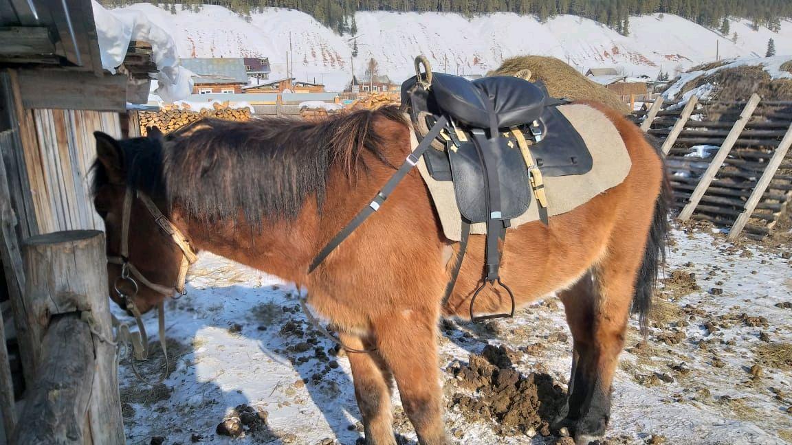 Cossack horse saddle, Cheaper, Saddles, Kirov,  Фото №1