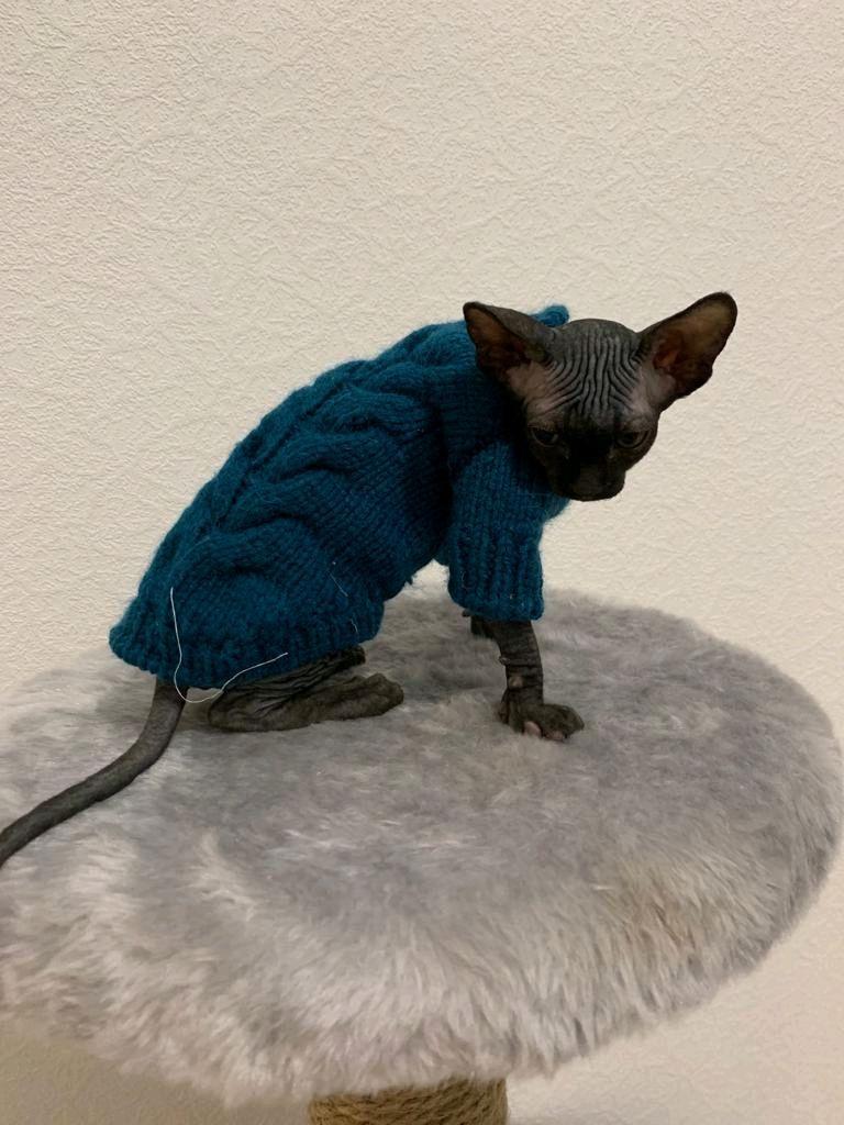 такой вид вязаная одежда для кошек фото капы