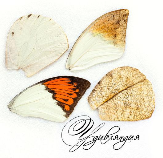 Другие виды рукоделия ручной работы. Ярмарка Мастеров - ручная работа. Купить Крыло бабочки натуральное №8.. Handmade. Белый