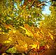 Яркая, сочная, осенняя, она всегда как праздник цвета. Я так люблю осенние букеты Из разных листьев, собранных у дома. В них шум дождя и яркий праздник цвета, В них летний вздох и осени истома.