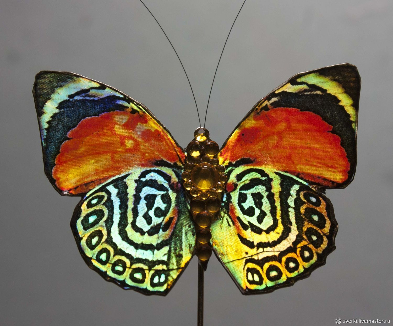 Бабочка, Брошь-булавка, Москва,  Фото №1