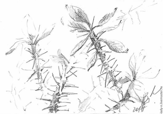 `Милые домашние колючки`, картина, графика, карандаш, недорого (скан)