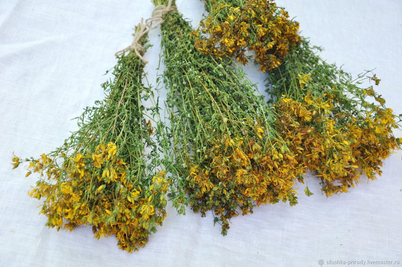 Зверобой продырявленный. Сухоцвет для флористики. Сбор 2020г, Букеты, Апшеронск,  Фото №1