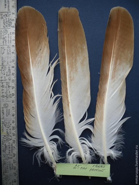Перья птиц - купить птичьи перья в интернет-магазине