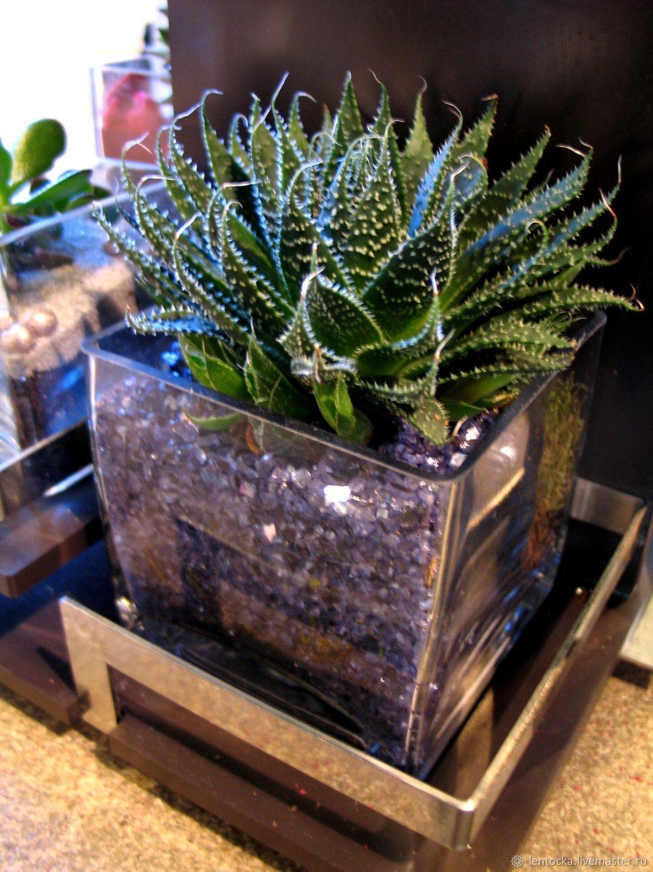 Суккуленты, кактусы в стекле куб. Фитодизайн, Композиции, Москва, Фото №1