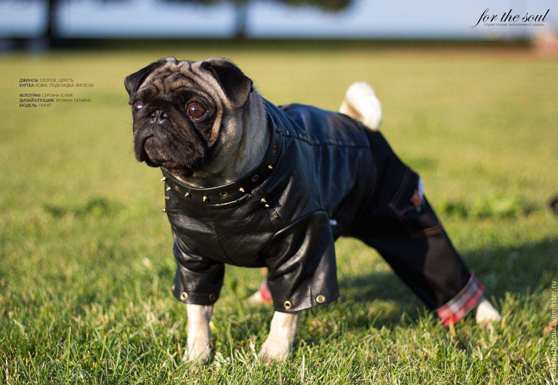 Одежда для собак, ручной работы. Ярмарка Мастеров - ручная работа. Купить Куртка байкерская. Handmade. Черный, байкеры, одежда для байкеров
