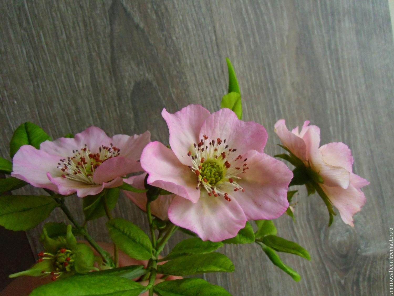 Шиповник фото цветок