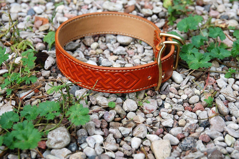 Collar for dog, Dog - Collars, Velikiy Novgorod,  Фото №1