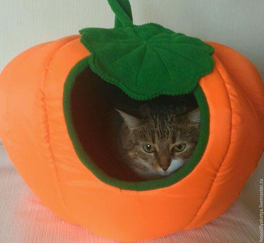 Домик для кошки стандартного размера.