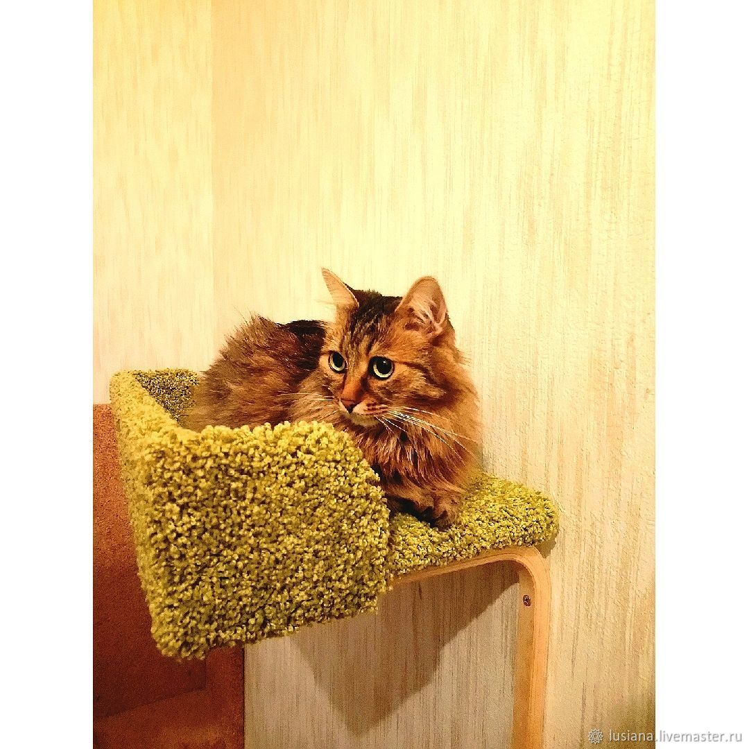 Wall SHELVES couches for cats buy. Available in size, Lodge, Ekaterinburg,  Фото №1