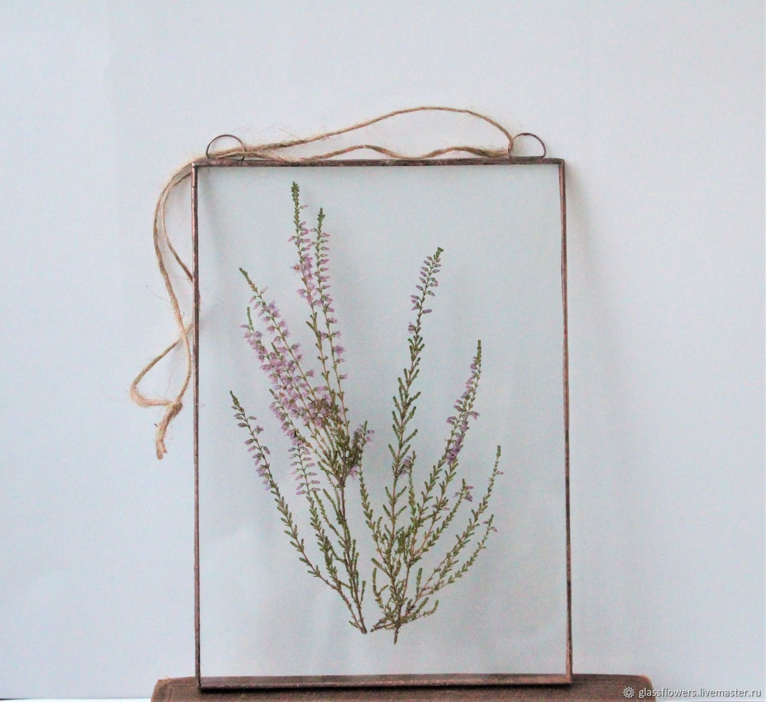 the herbarium in the glass. Herbarium of herbs in a frame. Heather, Stained glass, St. Petersburg,  Фото №1