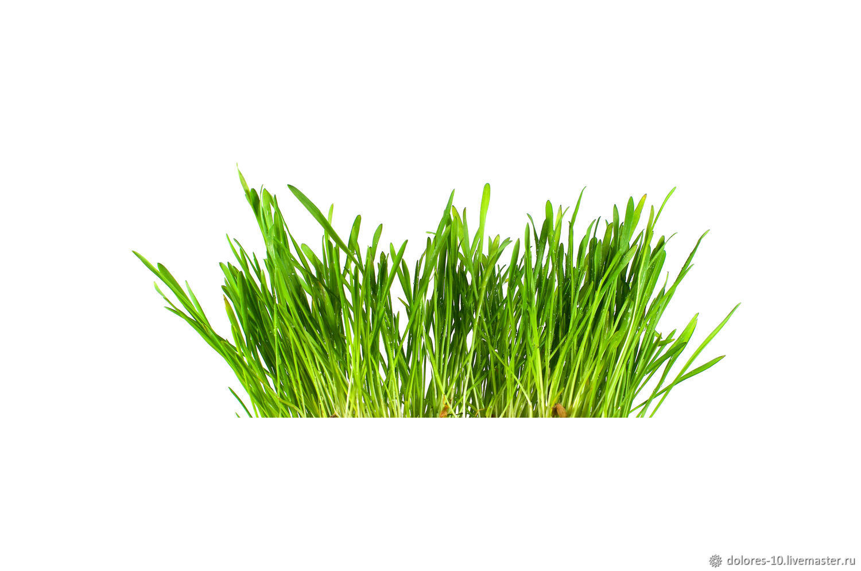 """Фотография для печати """" Зеленая трава"""" на белом фоне, Фотографии, Москва,  Фото №1"""