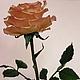 """Элементы интерьера ручной работы. Роза """"Летний рассвет"""".. Sezam.Flowers. Интернет-магазин Ярмарка Мастеров. Персиковый, солнечный"""