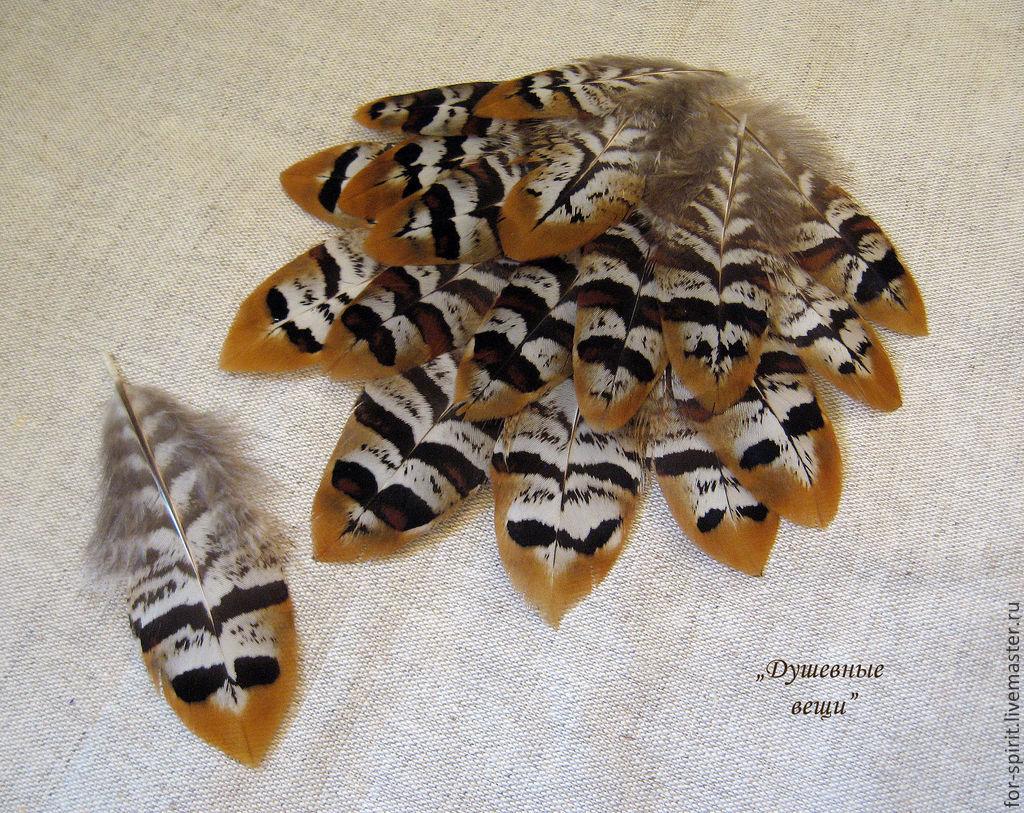 Другие виды рукоделия ручной работы. Ярмарка Мастеров - ручная работа. Купить (10 шт) Перья королевского фазана. Handmade.