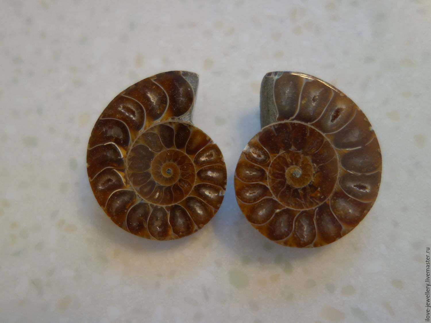 'Golden spiral' - a couple of wonderful Ammonites, Cabochons, Moscow,  Фото №1