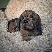 Куклы и игрушки handmade. Livemaster - original item Realistic Stuffed Animal: Bloodhound Puppy. Handmade.