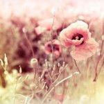 Цветы для композиций - Ярмарка Мастеров - ручная работа, handmade