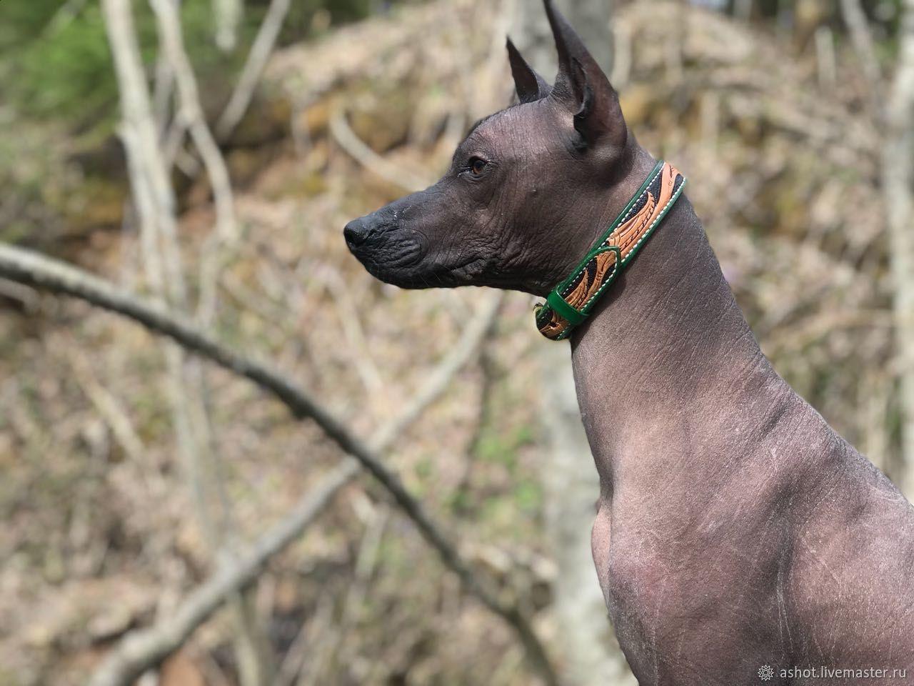 Collar for dog genuine leather, leather collar for dogs, Dog - Collars, Yoshkar-Ola,  Фото №1