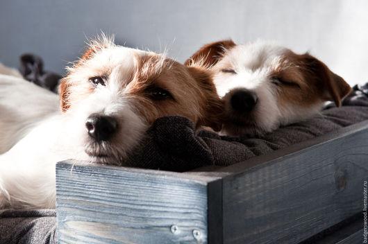 Аксессуары для собак, ручной работы. Ярмарка Мастеров - ручная работа. Купить Лежак для домашних животных с деревянным основанием. Handmade. Собака
