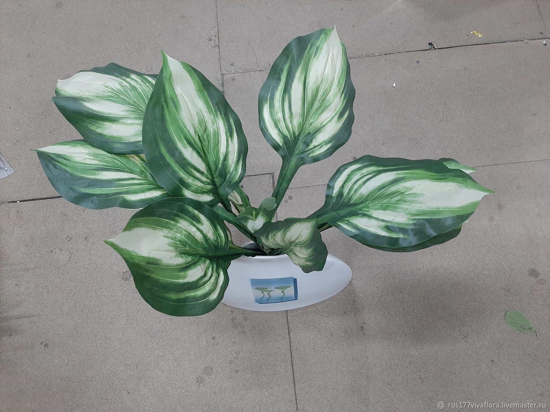 Флористическая зелень, хоста. 50 см, Растения, Москва,  Фото №1