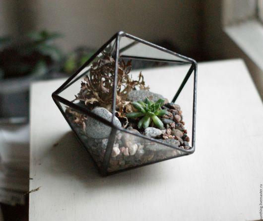 Флорариум 12 граней  Оформлен серпервивумом, лесным мхом и  камушками с Ладоги