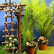 Мини растения, цветы ручной работы. Ярмарка Мастеров - ручная работа Кипарис в мини горшочке 30см. Handmade.