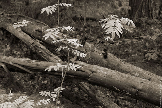 Фотокартины ручной работы. Ярмарка Мастеров - ручная работа. Купить Фотокартина Лесной мотив.. Handmade. Лес, дерево, фотография