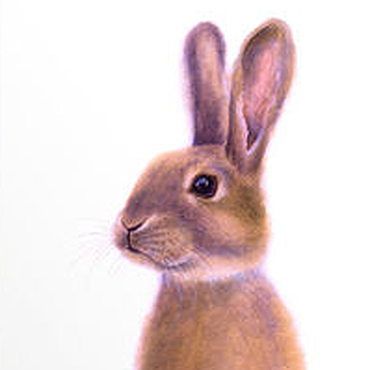Картины и панно ручной работы. Ярмарка Мастеров - ручная работа Оранжевый заяц. Принт.. Handmade.