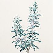 Картины и панно handmade. Livemaster - original item Botanical watercolor, Rosemary. Handmade.