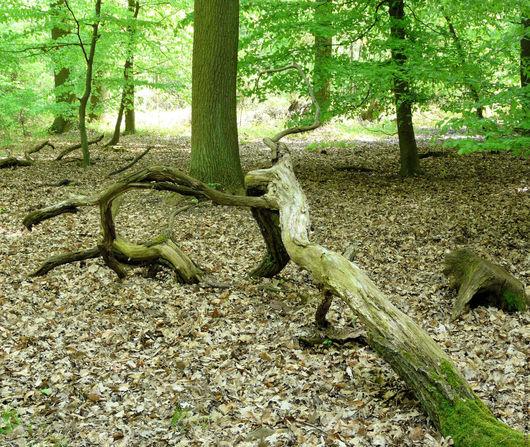 Пейзаж ручной работы. Ярмарка Мастеров - ручная работа. Купить лес. Handmade. Зеленый, фотография, лесная тема, лес чудес