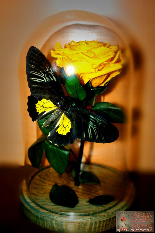 """Живая стабилизированная """"Роза в колбе"""" золотая с бабочкой, Цветы, Невинномысск,  Фото №1"""