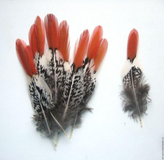 Другие виды рукоделия ручной работы. Ярмарка Мастеров - ручная работа. Купить Перо фазана натуральное (выбрать размер). Handmade.