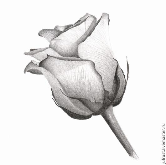 Картины цветов ручной работы. Ярмарка Мастеров - ручная работа. Купить Картина Роза, рисунок розы серый белый графика карандаш. Handmade.