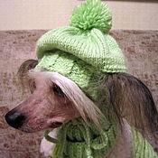 Для домашних животных, ручной работы. Ярмарка Мастеров - ручная работа Вязаный комплект для фотосессии: шапка + шарф для собачки. Handmade.
