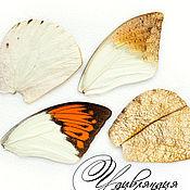 Материалы для творчества ручной работы. Ярмарка Мастеров - ручная работа Крыло бабочки натуральное №8.. Handmade.