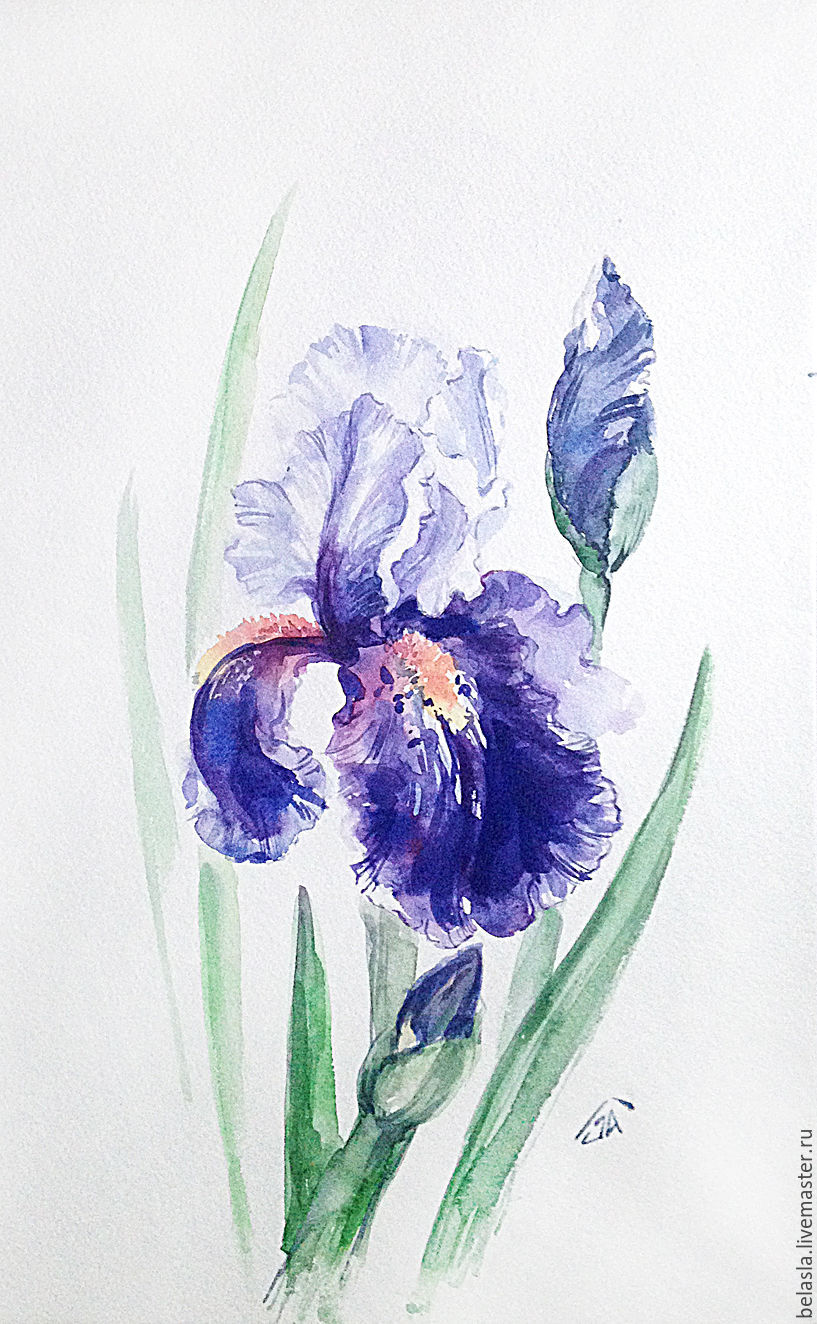Purple iris watercolor shop online on livemaster with shipping flower paintings handmade livemaster handmade buy purple iris watercolor izmirmasajfo